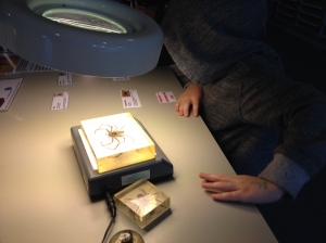 Will was fascinated by the 'station' where he could view the preserved insects under the microscope.